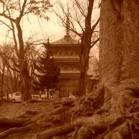 善光寺 Temple Zenko-ji / Nagano – Japon
